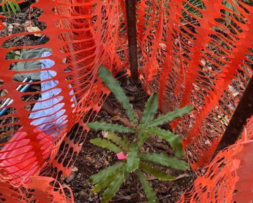 bush-regeneration1