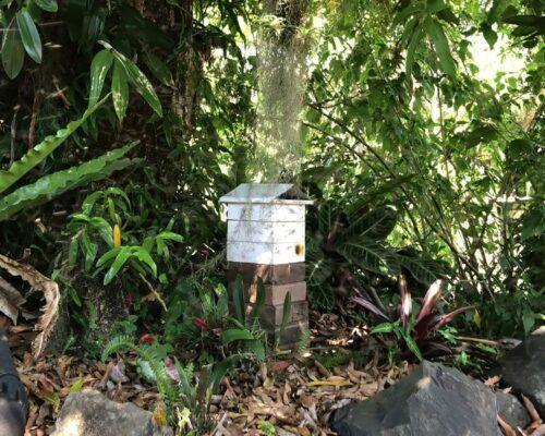 native-bees-biodiverse10