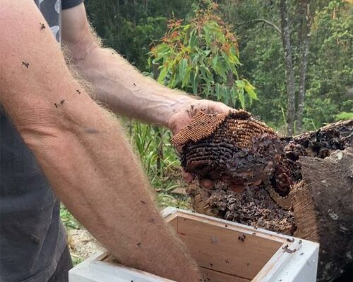 native-bees-biodiverse2