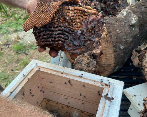 native-bees-biodiverse3