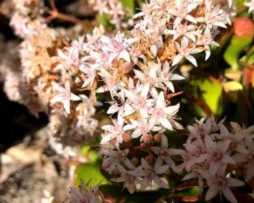 native-bees-biodiverse4