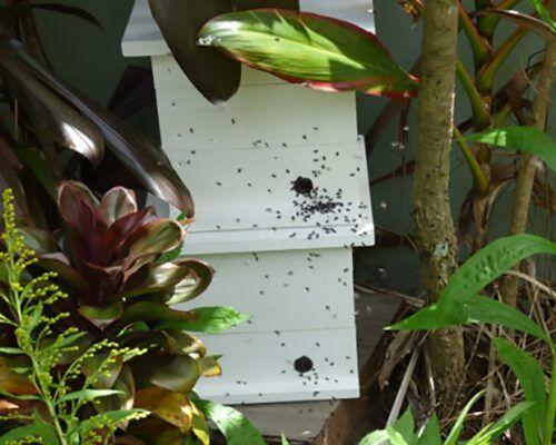 native-bees-biodiverse5
