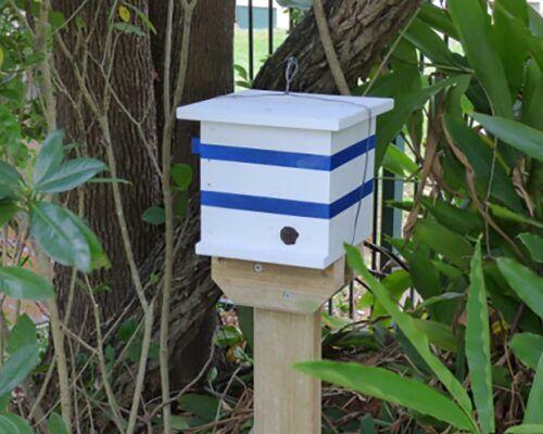 native-bees-biodiverse8