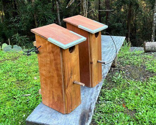 parrot-nest-box