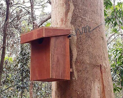 ringtail-nest2