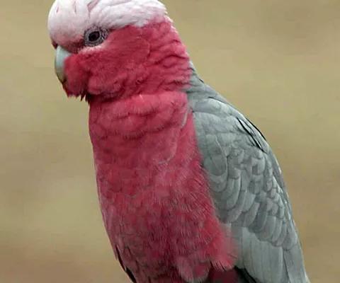 small-parrots3