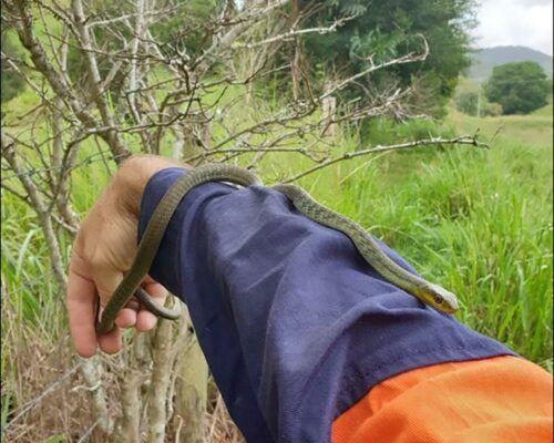 snake-catcher2