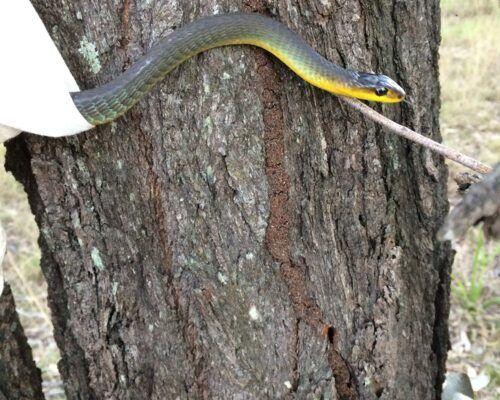 snake-catcher4